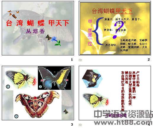台湾蝴蝶甲天下 ppt9